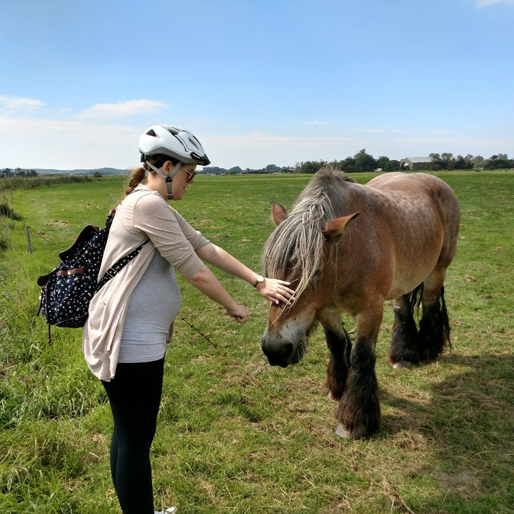 Domburg Pferd